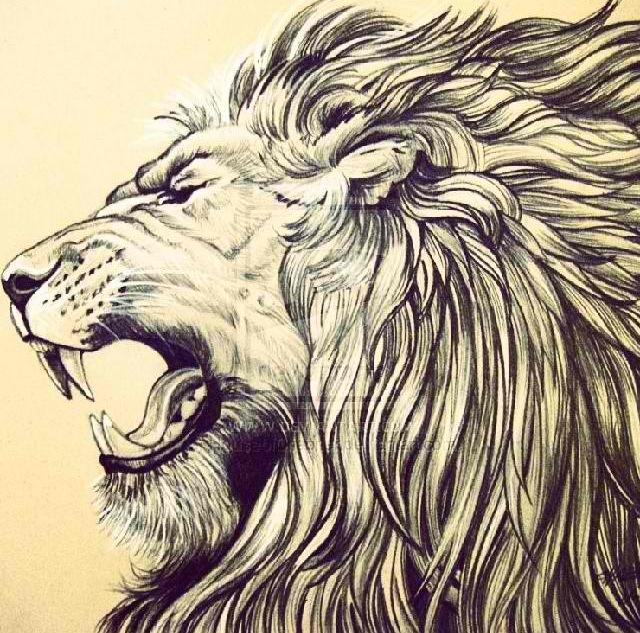 640x633 Lion Head Inspiration Lions, Tattoo And Tatoo
