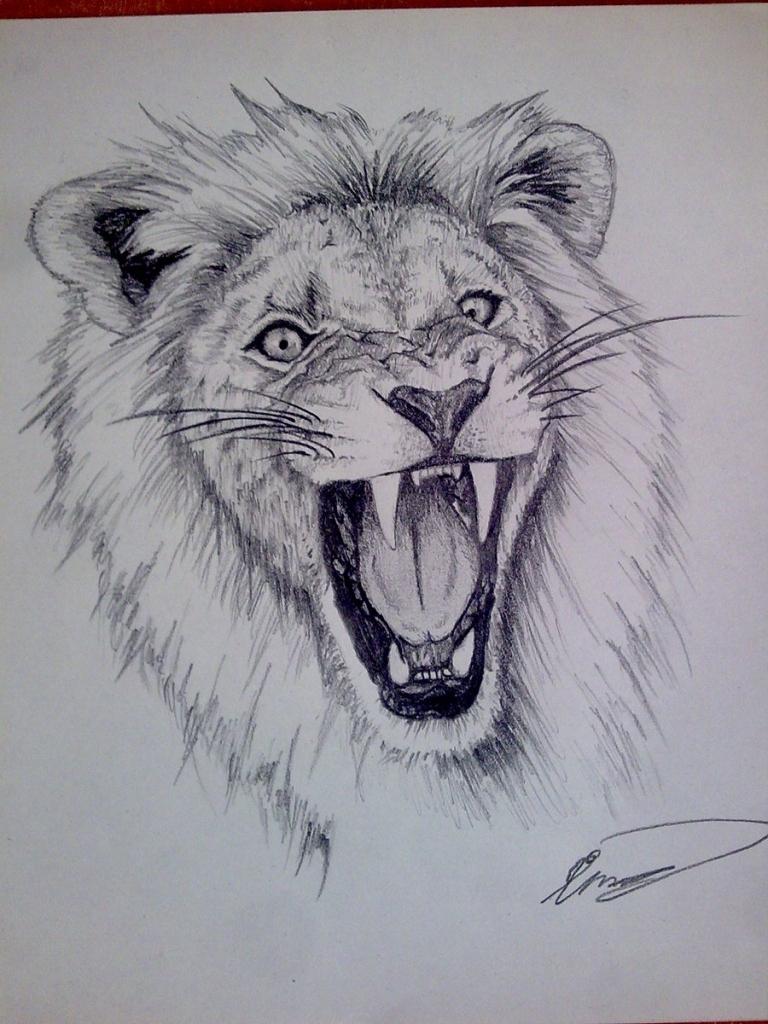 768x1024 Pencil Sketch Of Lion Head