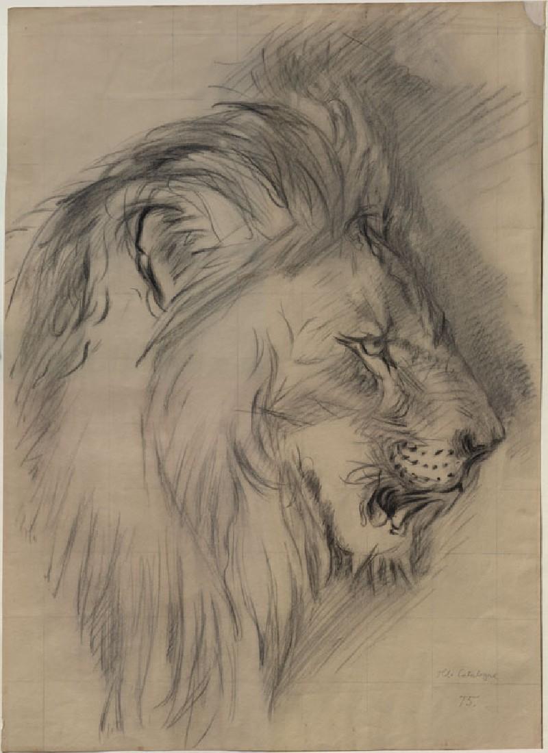 800x1100 Pencil Sketch Of Lion Head
