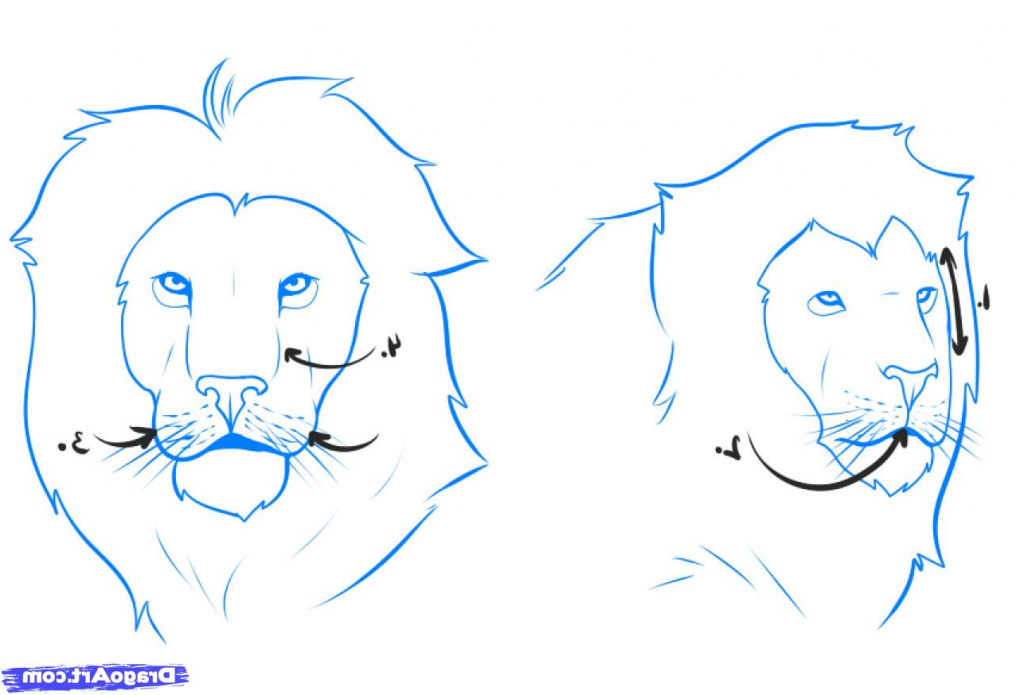 1024x695 Easy Lion Drawing Steps