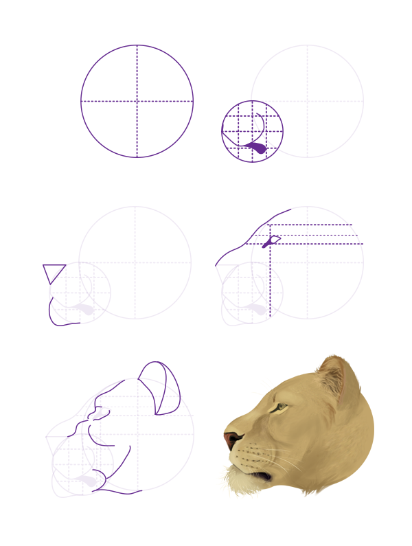 600x795 How To Draw Animals Big Cats, Their Anatomy And Patterns
