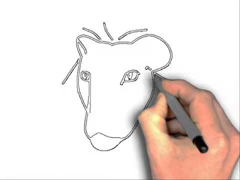 Line Drawing Of Lion : Lion head drawing step by at getdrawings free for