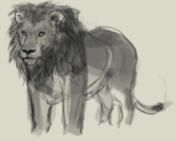600x482 How To Draw Lion