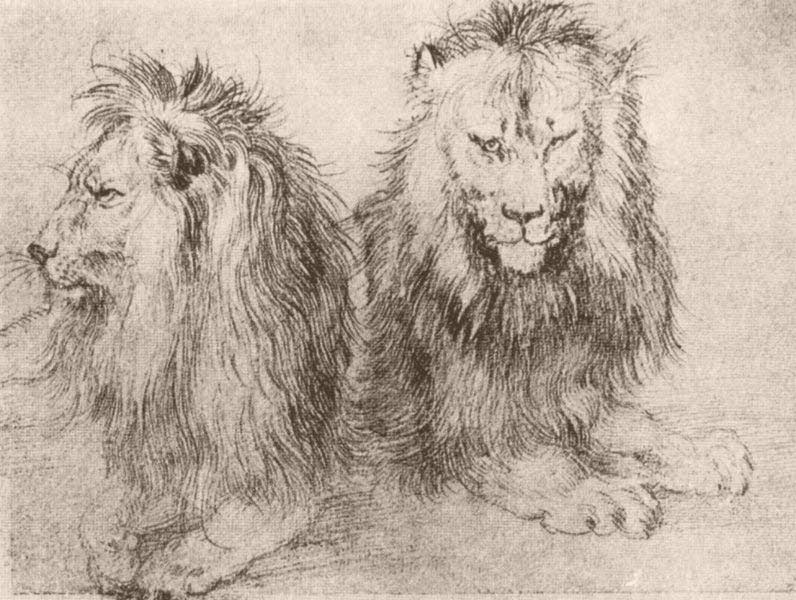 796x600 The Great Lions Of Drawing The Scribbles Institute