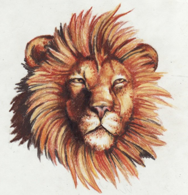 661x683 Lion Drawing By Kittencaboodles