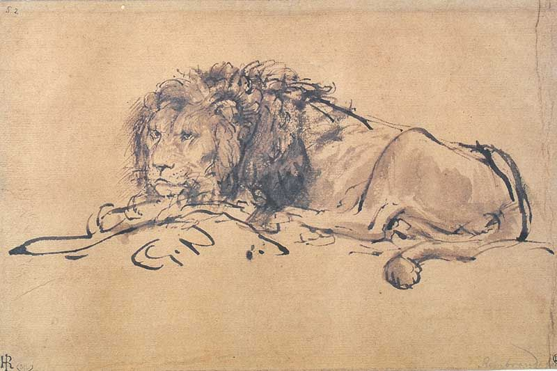 800x533 A Lion Lying Down By Rembrandt Van Rijn