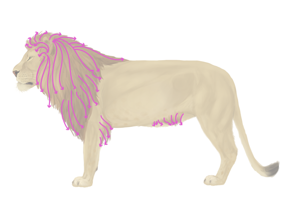 600x419 How To Draw Animals Big Cats, Their Anatomy And Patterns