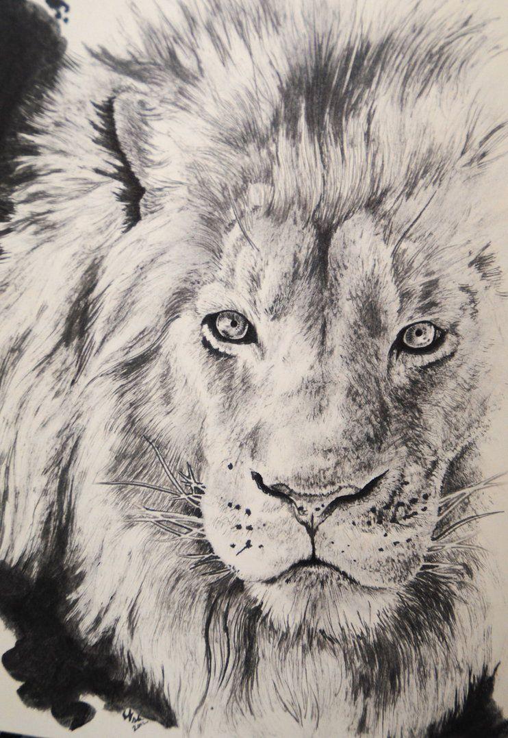 742x1077 Lion Mane Drawing Detail