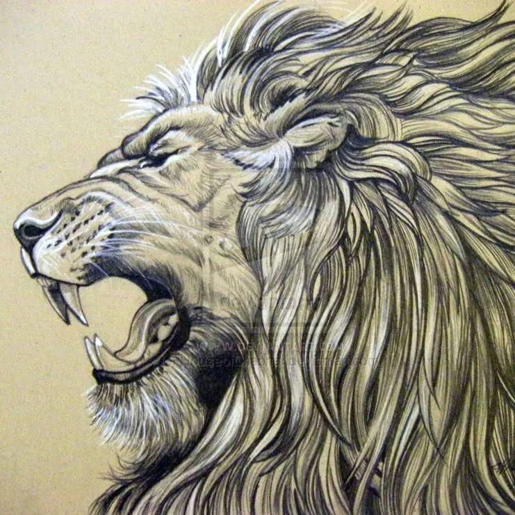 741x740 Lion Mane Illustration Tattoos Body Art, Body Art