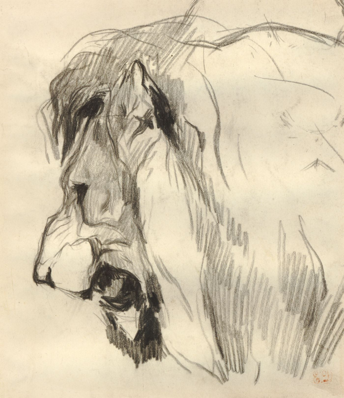 1400x1618 Head Of A Lion In Profile With Mouth Open. Graphite Drawing 1 400