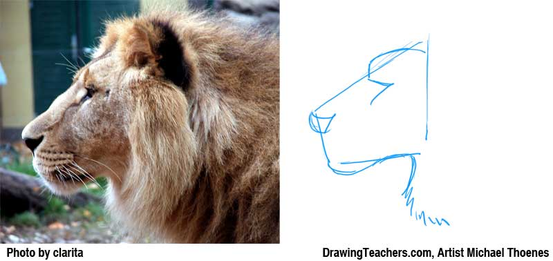 800x378 Lion Drawing