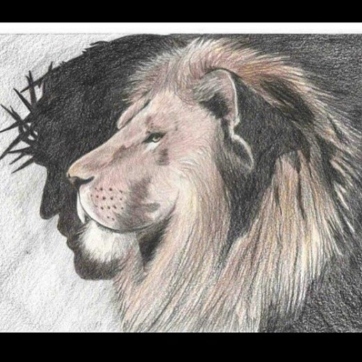 520x520 Jesus The Lion Of The Tribe Of Judah Lions Lions