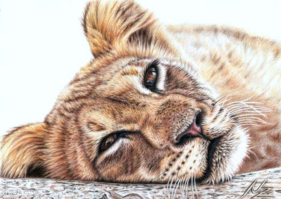 980x695 25 Beautiful And Realistic Animal Drawings Around The World