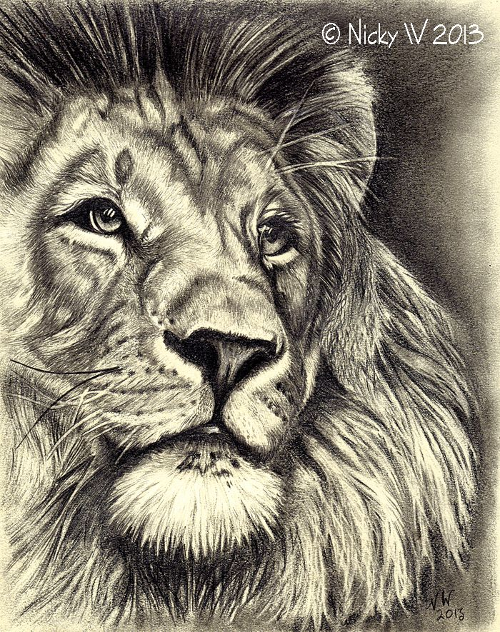 Pencil Drawings Of A Lion