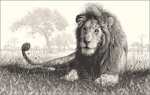 500x317 Lion Country'