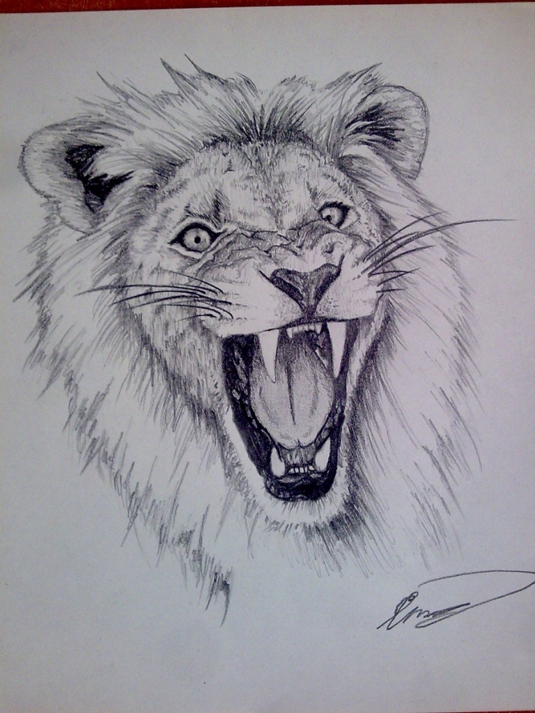 768x1024 Lion Pencil Sketches Pencil Sketch Of Lion Lion Pencil Sketch