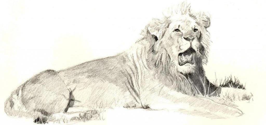1024x481 No Lion Dies Keith Andrew Mcallister Wildlife Artist