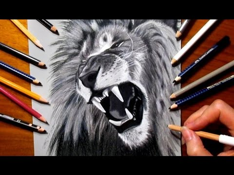 480x360 Tribute Pencil Drawing To Cecil The Lion R.i.p.