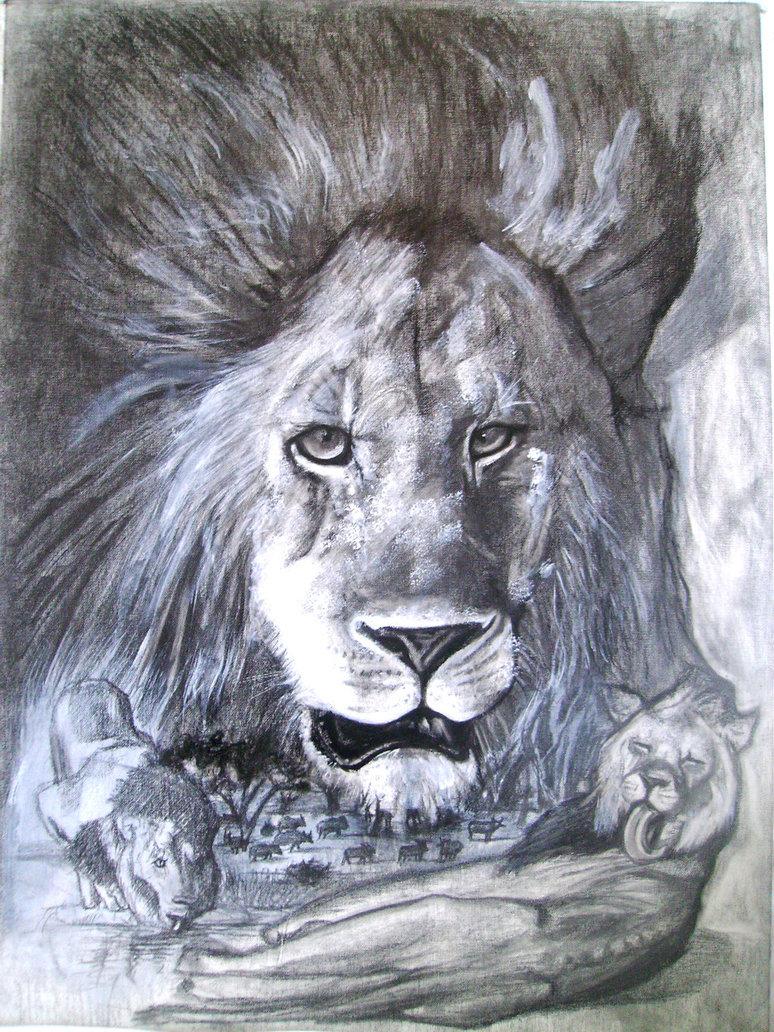 774x1032 Lion Pencil Drawing By Moisessurielart