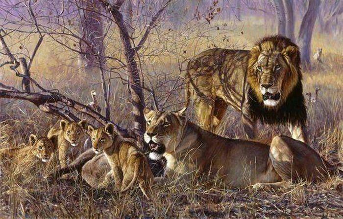 700x448 Lion Pride Adversity Lion Pride