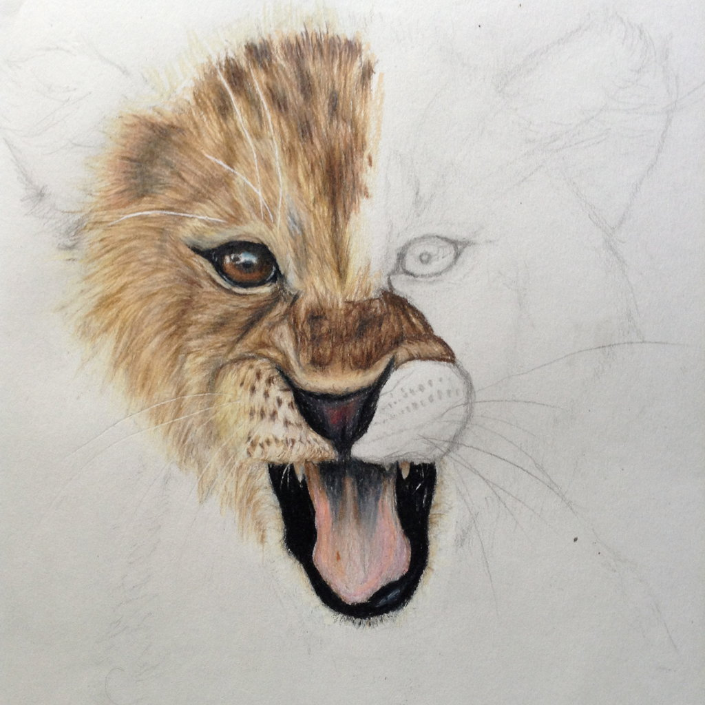 1024x1024 Lion Cub Drawing By Xxeucaxx