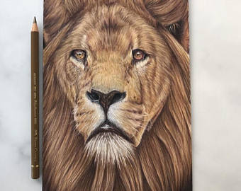 340x270 Lion Drawing Etsy