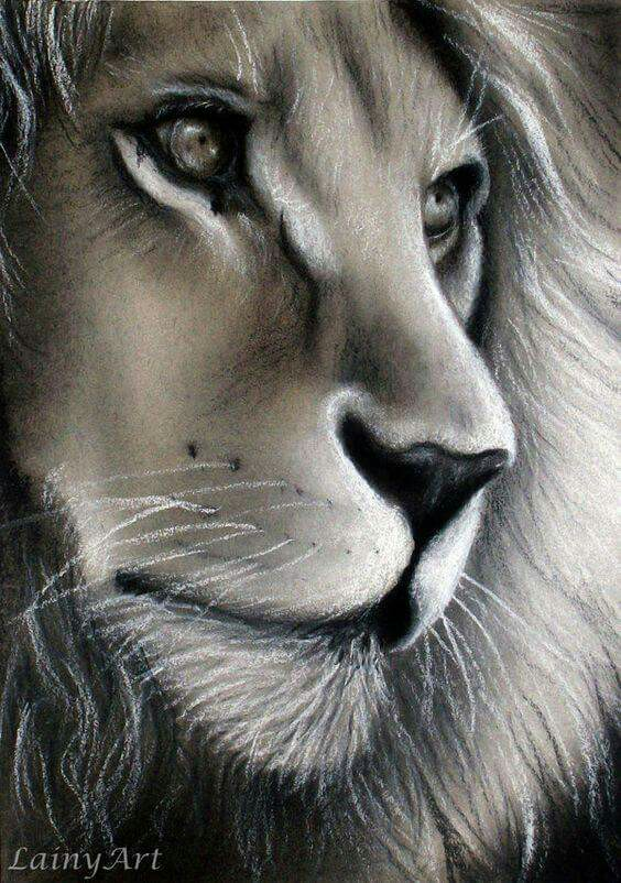 564x802 Pin By Nuray Gurler Bilican On Les Fauves, Lion, Tigre