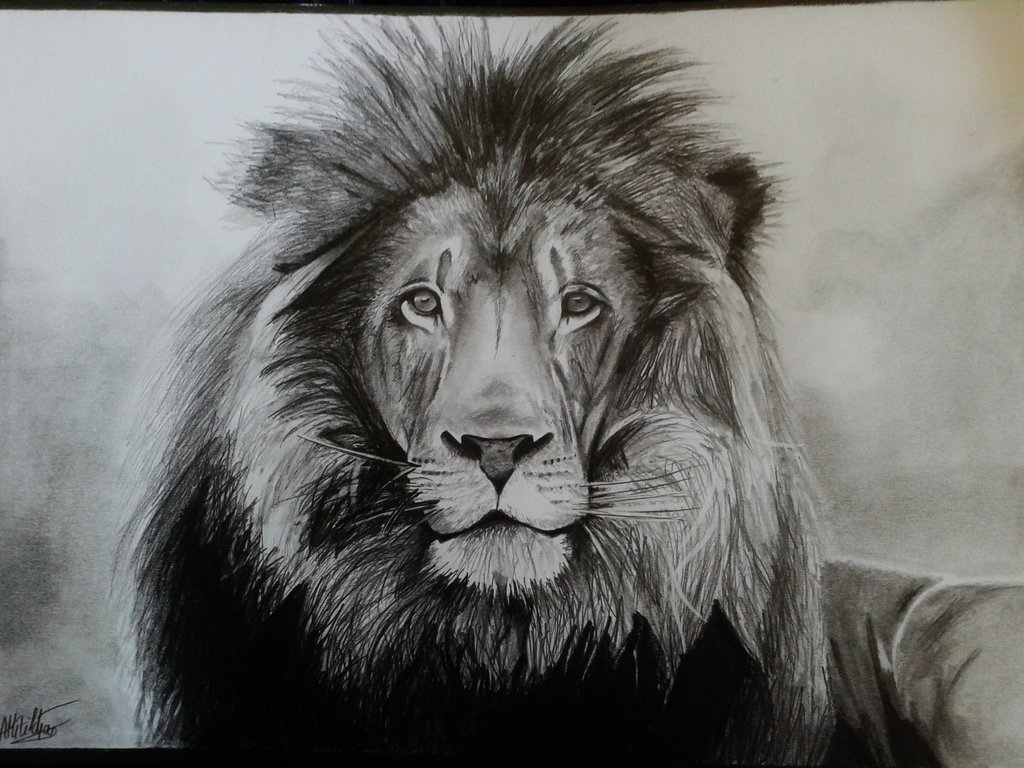 1024x768 Realistic Lion Drawing Realistic Lion Drawing How To Draw Animals