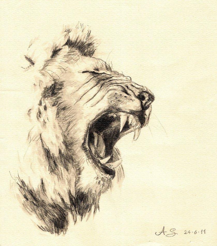 839x953 Lion Drawing In Pencil Drawn Lion Lion Roaring