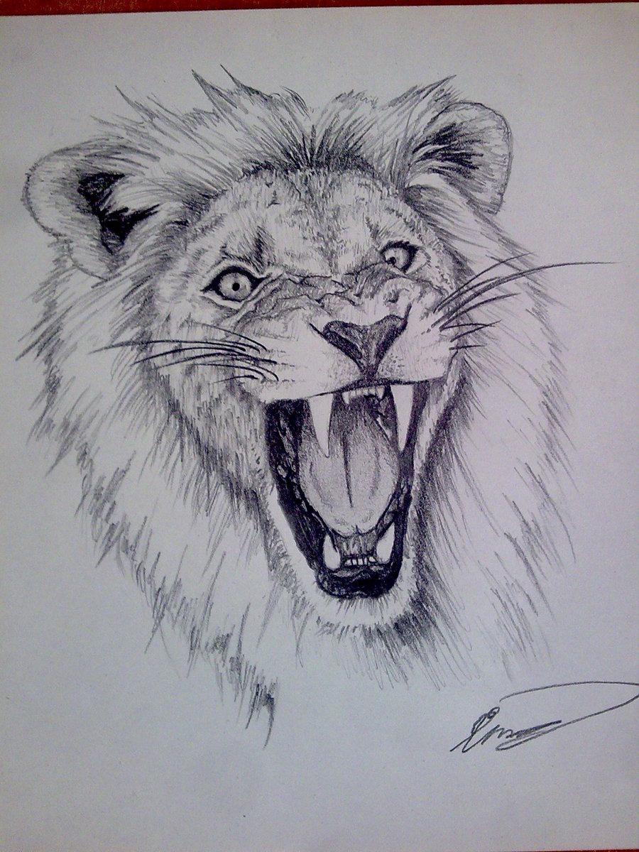 900x1200 Lion Drawing In Pencil Lion , Pencilcleefard