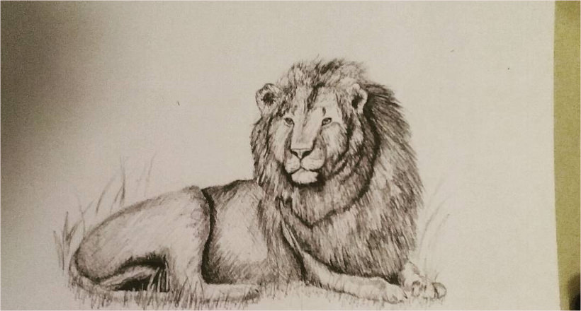 820x440 Lion Drawing, Art Ideas, Sketches Design Trends
