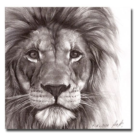564x564 Best Pencil Drawing Of A Lion