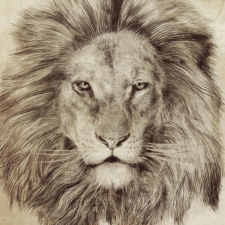 900x900 Lion Drawings Fine Art America