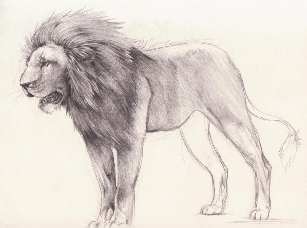 1000x741 Lion Sketch By Xmits