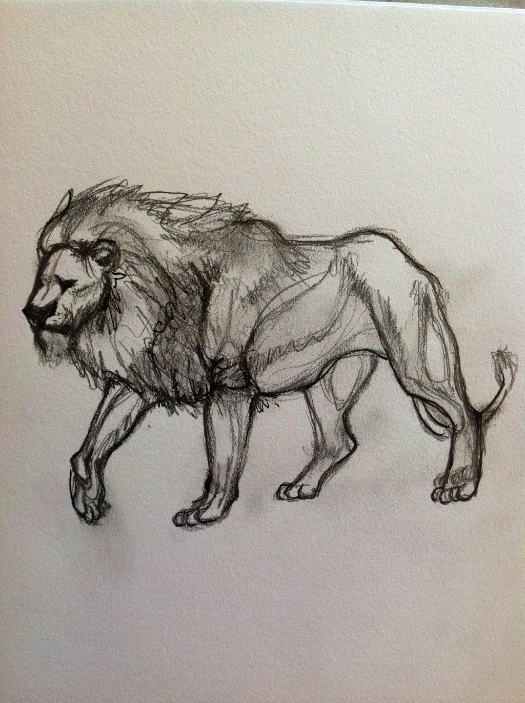 1024x1371 Sketch Drawing Of Lion Lion Sketch 1reecekikluvloot