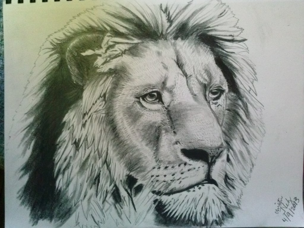 1024x768 More Detailed Lion Sketch By Hellheaven17