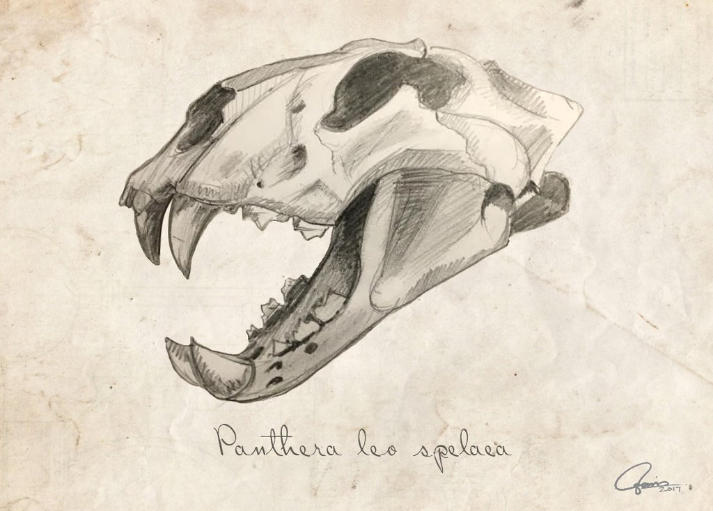 1024x733 Eurasian Cave Lion Skull (Quick Study) By Ajgus