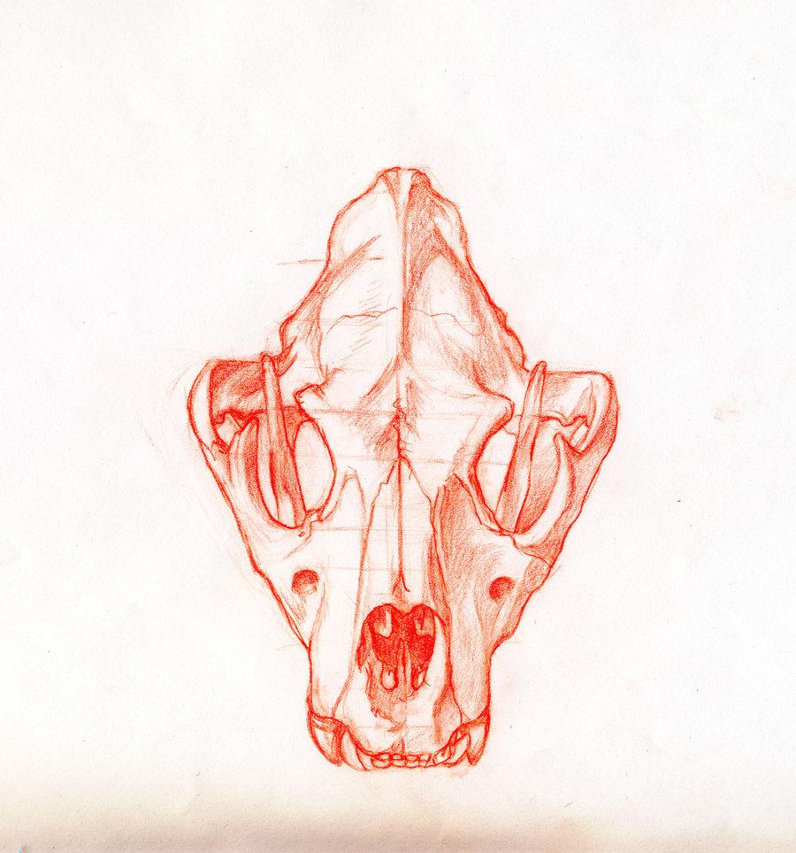900x964 Lion Skull