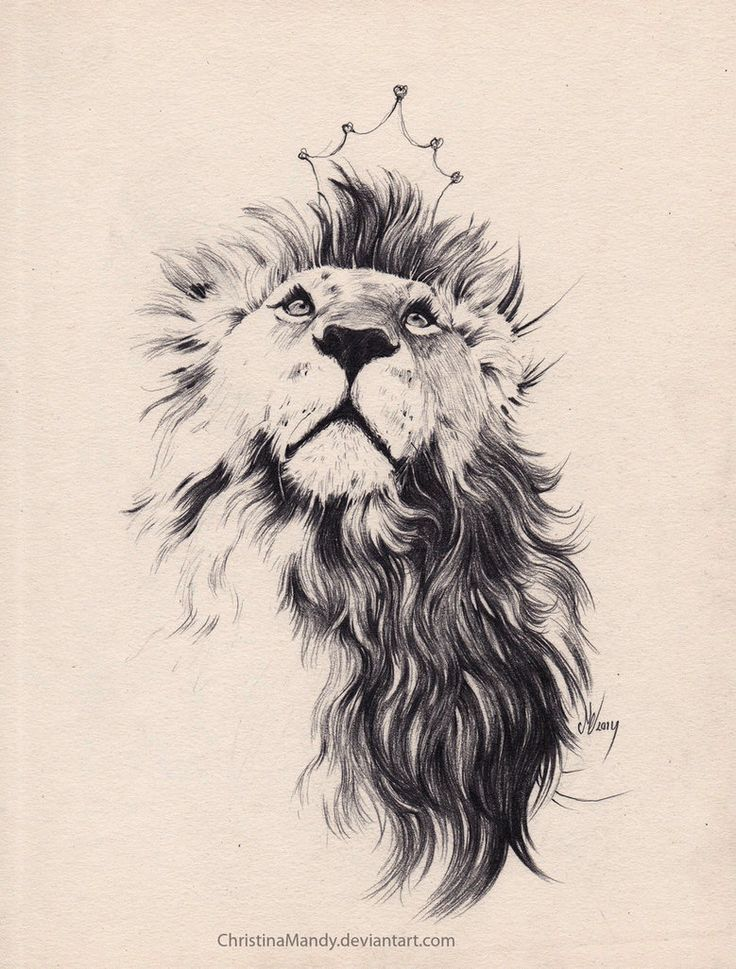 736x969 Image Result For Lion Tattoo Art On Art Lions