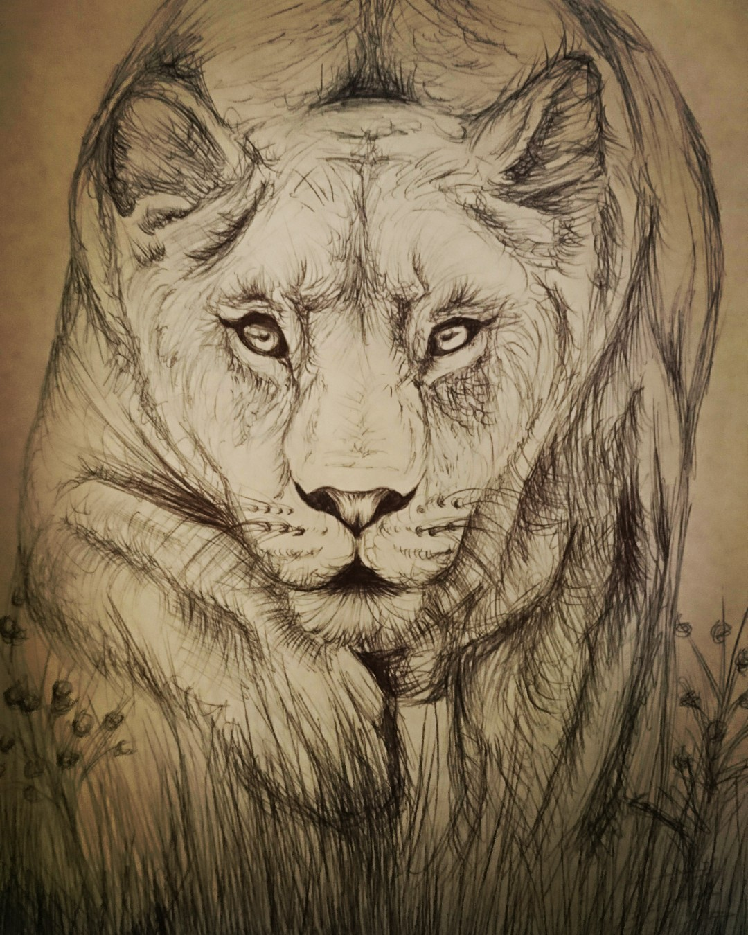 1080x1350 Lioness Drawing In Biro Pen Tattoo Ideas Tattoo