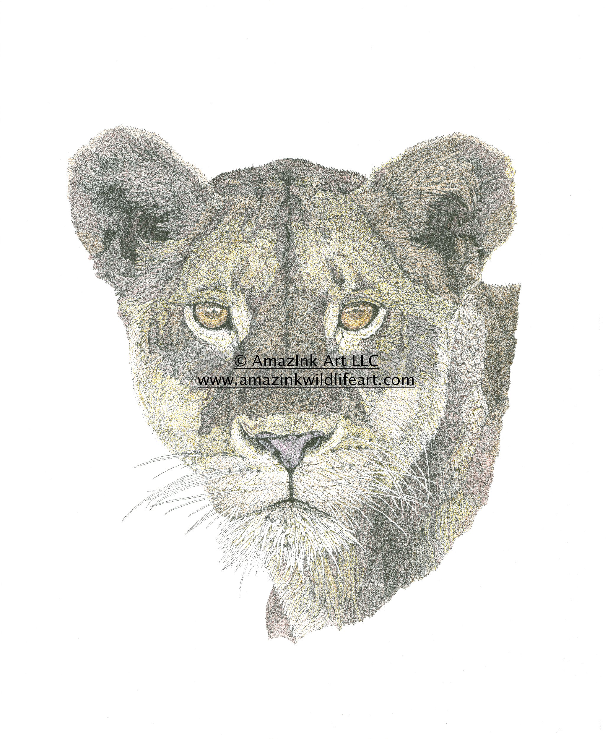 2075x2500 Drawings Tagged Female Lion