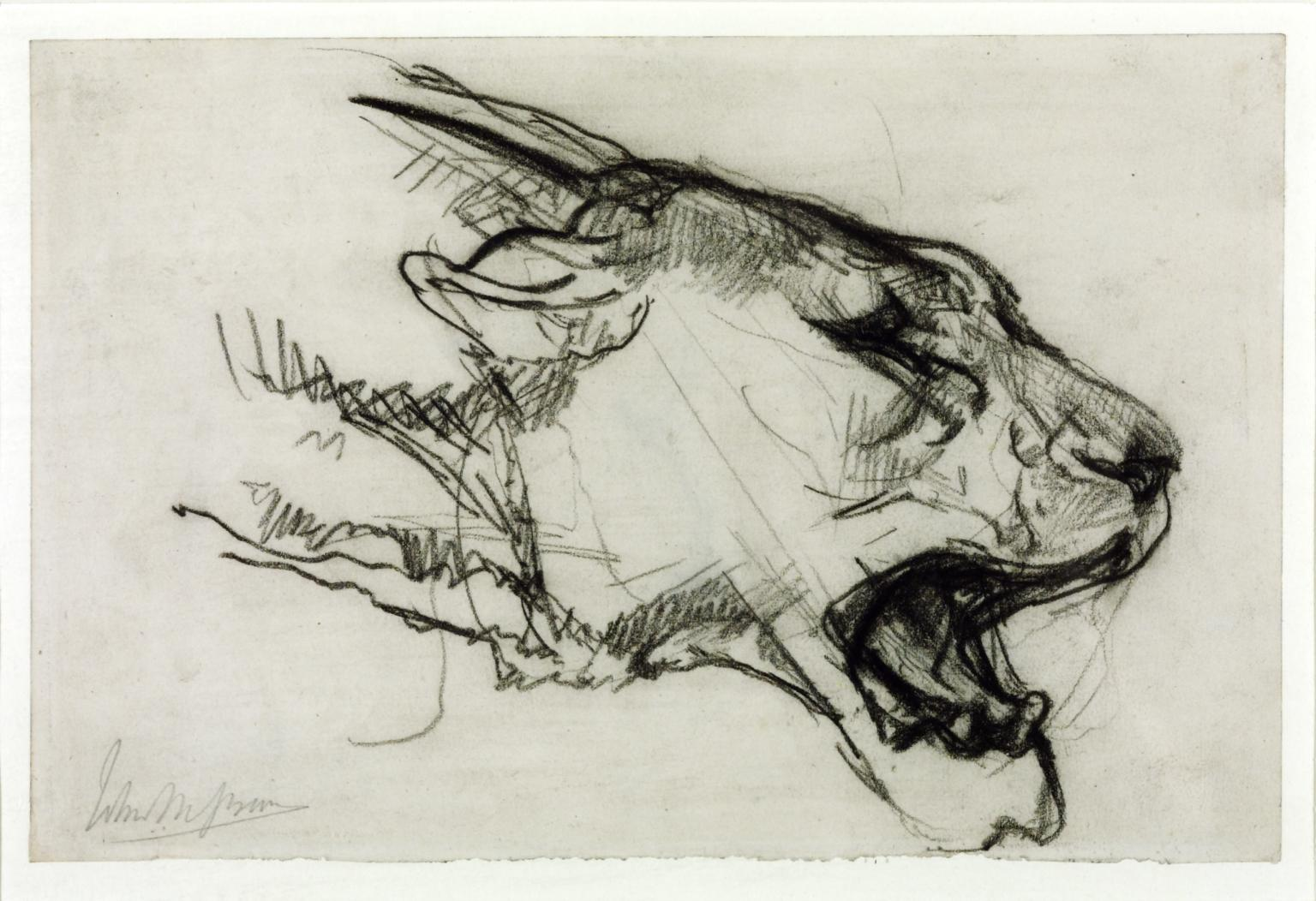 1536x1052 Head Of A Lioness', John Macallan Swan Tate