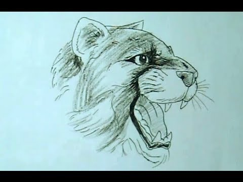 480x360 How To Draw A Roaring Lioness Yzarts Yzarts