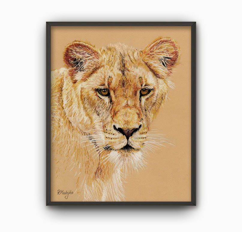 807x775 Lion Print From Original Pastel Pencil Drawing