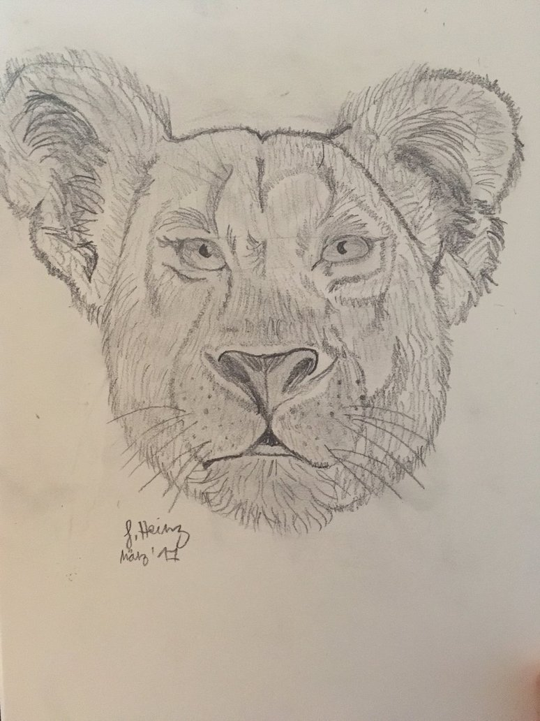 774x1032 Lioness Head Drawing By Fire Sanyu