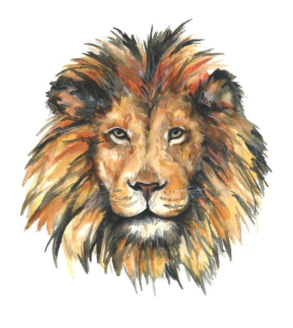 570x639 Best 25 Lion Painting Ideas On Lion Art Lion Drawing