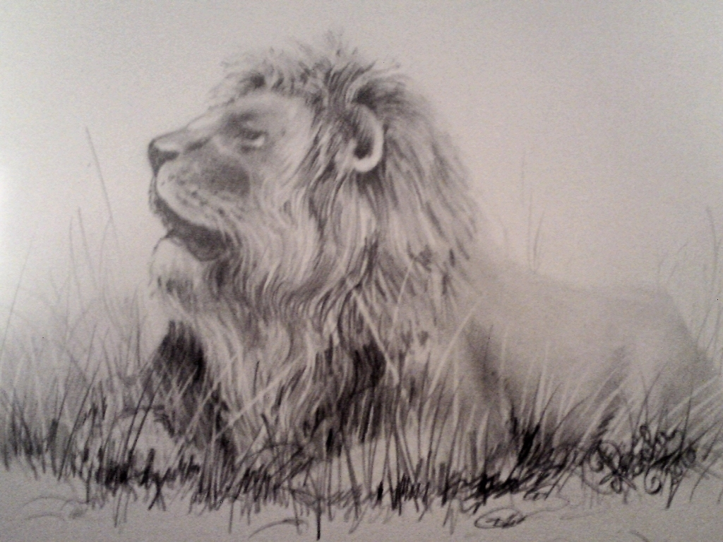 1024x768 Drawings Of Lions Drawings Lions Mao Workartwebgarden