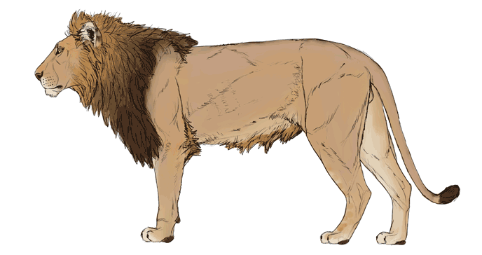 688x364 How To Draw Big Cats Lions, Tigers, Cheetahs, And Much More