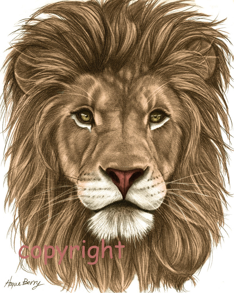 806x1008 Lions Drawings In Color Images For Gt Colorful Lion Drawing