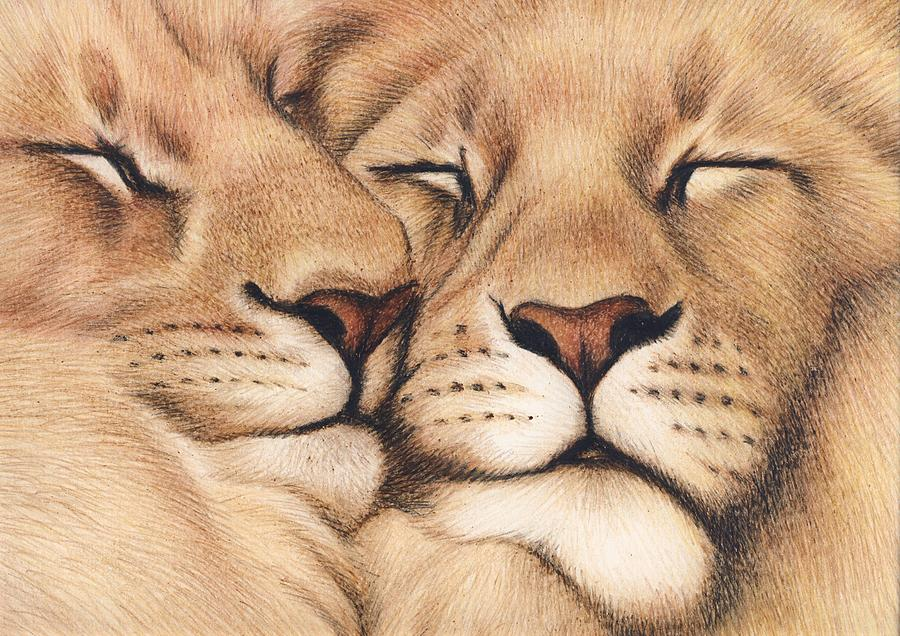 900x636 Lions In Love Drawing By Genevieve Desy